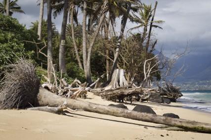 Maui_Klaas-5408